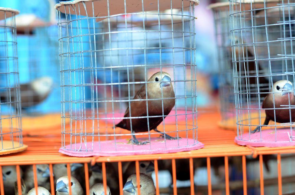 ¿Por qué hay gente que captura pájaros?