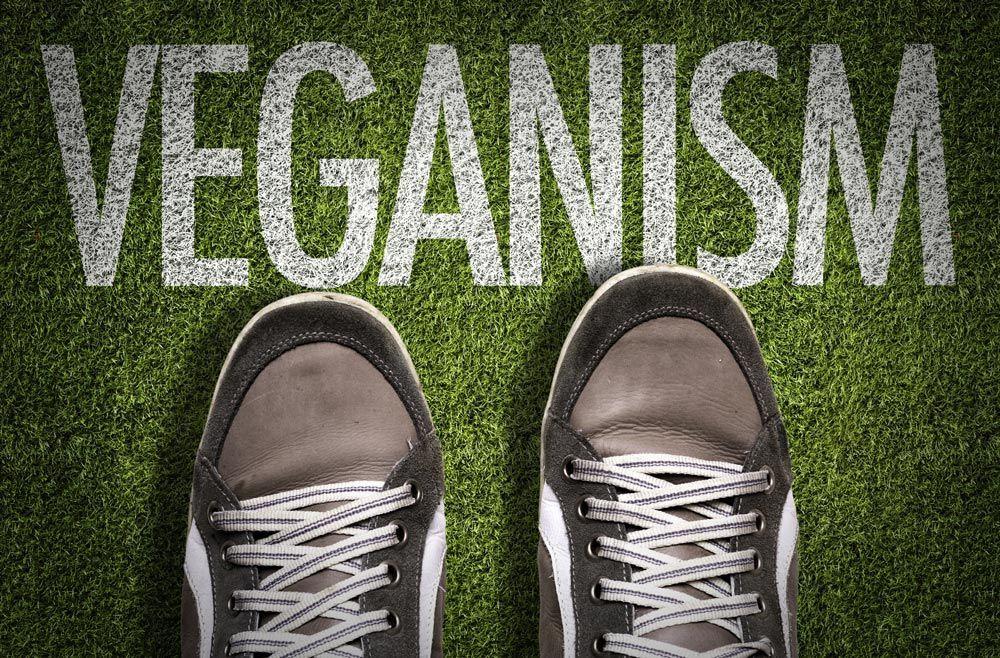 ¿Qué es la piel vegana ¿Es sostenible
