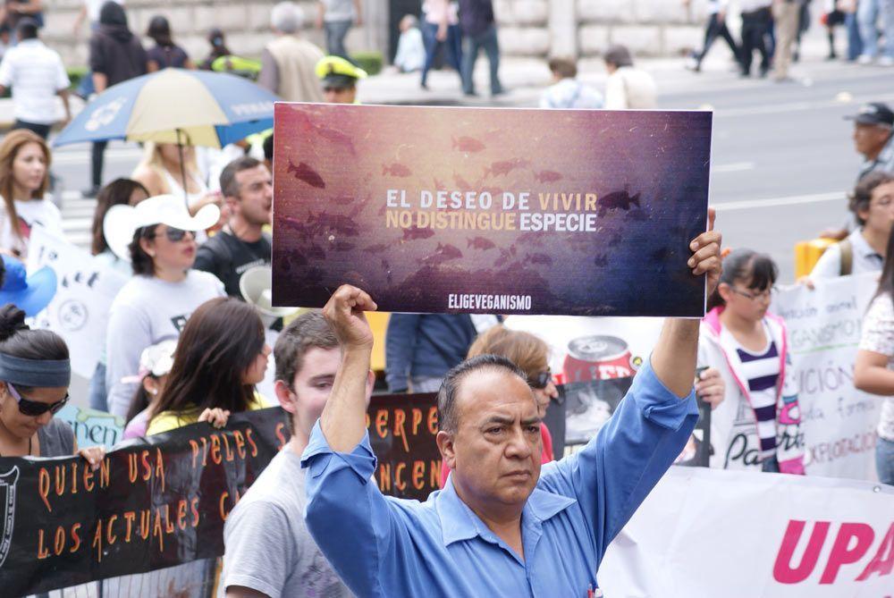 Activismo de acción directa