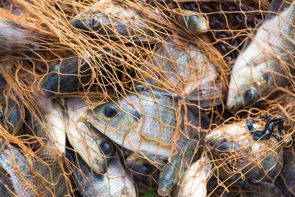 La incómoda verdad sobre la pesca