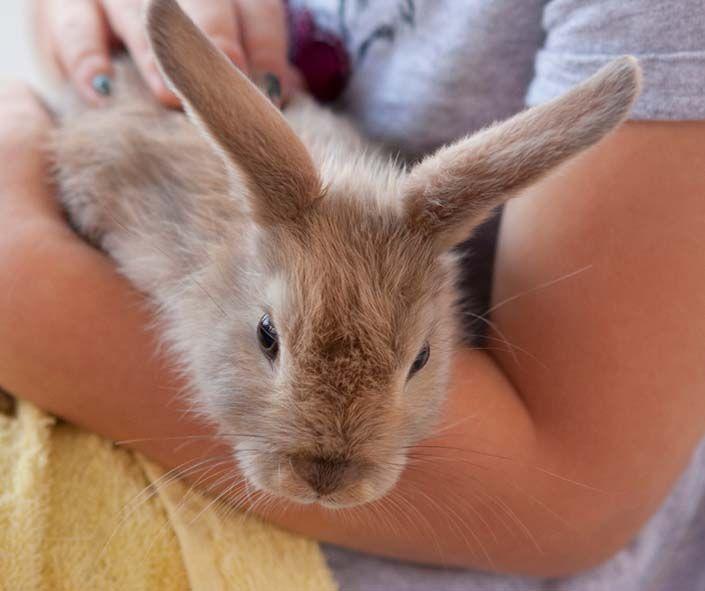 Garantizar el bienestar del conejo con el que convivimos